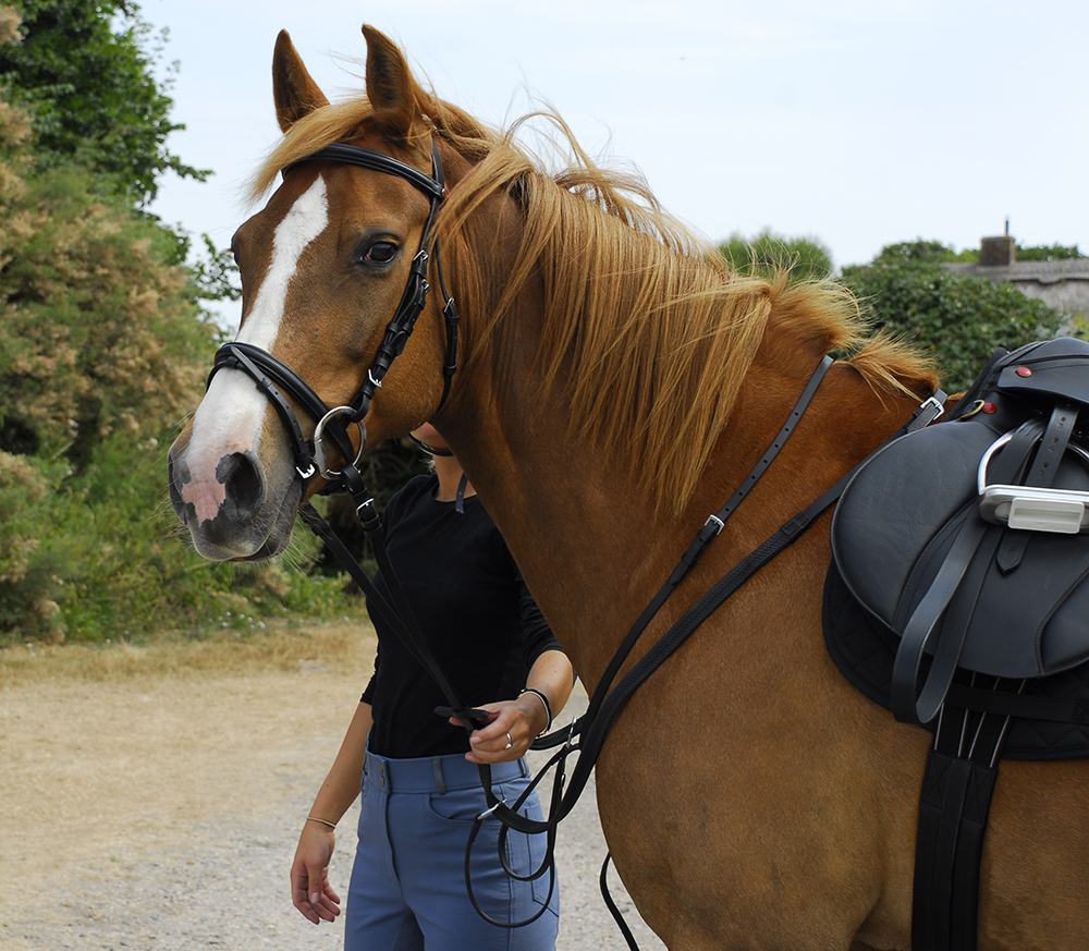 Equestrian Bridle Parts & Accessories Heritage English comfort